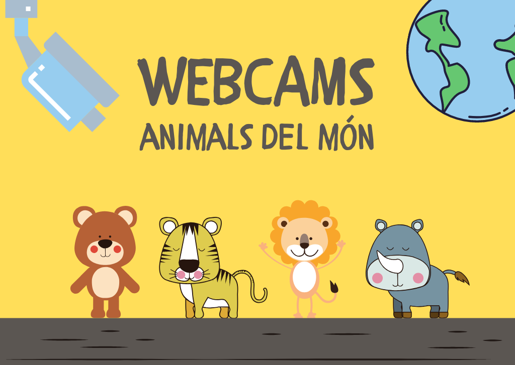 Webcams animals